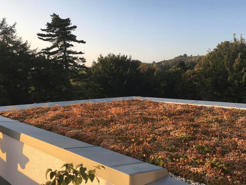 Sedumdak met uitzicht en zonsondergang